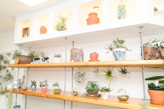 Tremenheere Nursery - Succulents and Air Plants