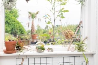 Tremenheere Nursery - Tiny Terrariums