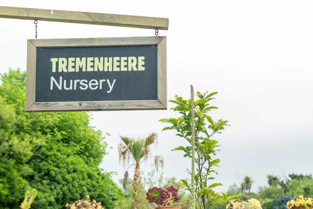 Tremenheere Nursery Air Plants-3