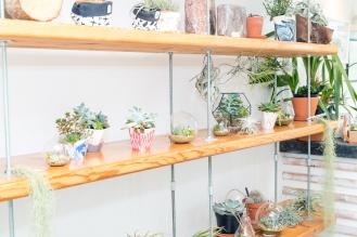 Tremenheere Nursery - Fabulous Pots and Terrariums