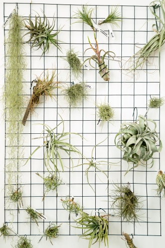 Tremenheere Nursery - Even More Air Plants