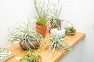 Tremenheere Nursery - More Air Plants