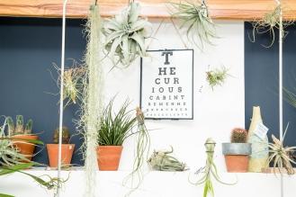 Tremenheere Nursery - The Curious Cabinet