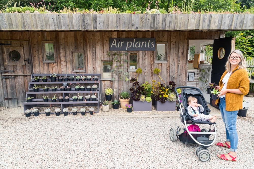 Tremenheere Nursery Air Plants